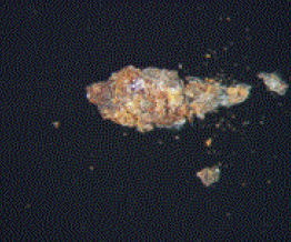 Figure 3. Optical microscope image of the dark speck as mounted on the glass slide.
