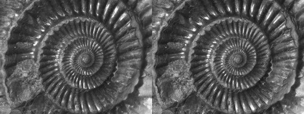 Stereo pair images of an ammonite fossil