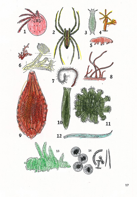 Hand-colored pages of fresh water invertebrates