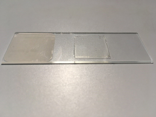 microscope slide labeling error