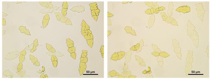 pleochroism microscopy polarizer orientation
