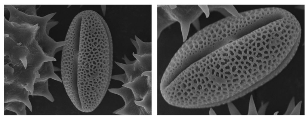 sample orientation matters in scanning electron microscope