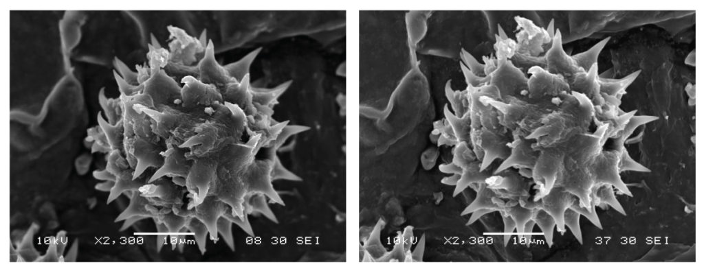 Effect of lens aperture on scanning electron microscope depth of field