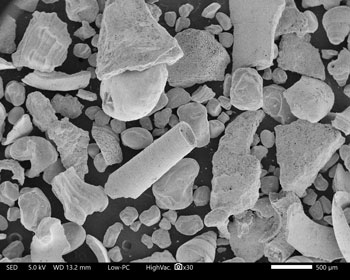 Arabian Gulf, Bahrain, electron micrograph, 30X.