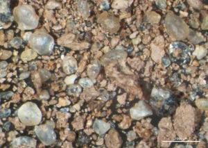 Pitcher's mound clay (washed), Waupaca, WI, 25X
