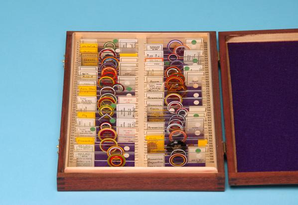 ringed slides in case