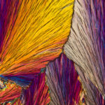 Coming Together photomicrograph by Carol Roullard