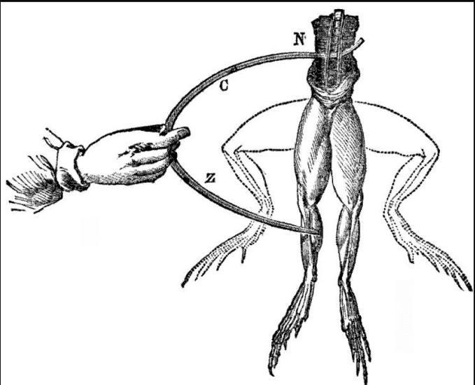 Galvani frog leg experiment
