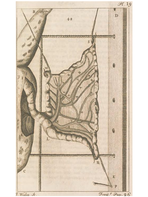 Illustration from Micrographia Illustrata, Of the Circulation of Blood, by George Adams.