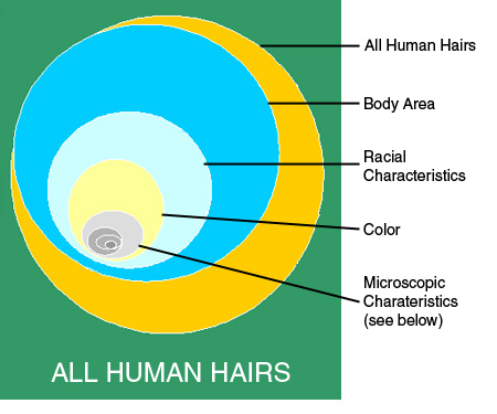 The Science Of Forensic Hair Comparisons And The Admissibility Of Hair Comparison Evidence Frye And Daubert Considered